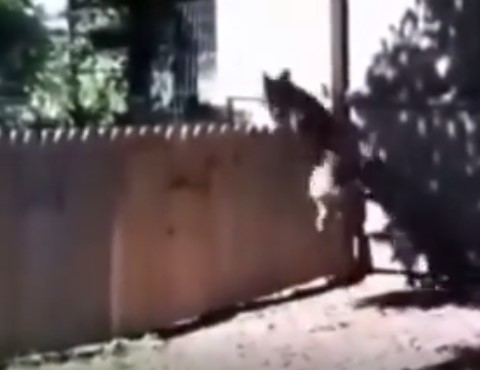 Funny – MAN PROUDLY FILMS THE FENCE HE BUILD TO KEEP HIS DOG IN THE YARD. WAIT FOR IT.