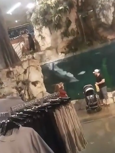 WTF – Guy decided to take a swim at Bass Pro